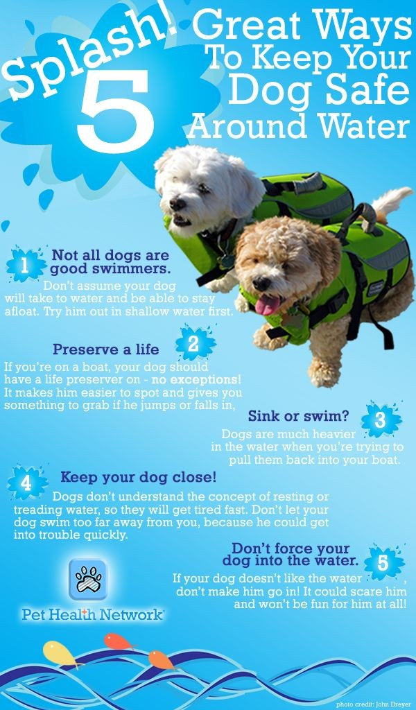 Keep dogs safe around water. Not all dogs are good swimmers, Dogs should wear life preservers, dogs are heavier in water, dogs don't understand the concept of resting or treading water so they'll tire fast, don't force your dog into the water.