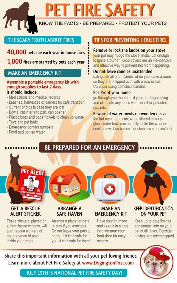 Pet fire safety. 40,000 pets die in house fires each year and 1000 fires are started by pets each year. Remove or lock the knobs on your stove, do not leave candles unattended, pet-proof your home, and beware of water bowls on wooden decks. Make an emergency kit for your pet. It should include medication/medical records, leaches/harnesses or carriers, current photo in case they are lost, bowls/cat litter and pan/can opener, waste bags, toys and pet beds, emergency contact numbers, food and bottled water.