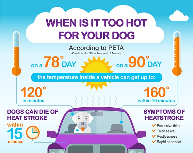 When is it too hot for your dog? Dogs can die of heat stroke in 15 minutes. Symptoms of heatstroke: excessive thirst, thick saliva, restlessness, rapid heartbeat. Inside a vehicle on a 78 degree day can become 120 degrees in minutes. On a 90 degree day, inside a car can become 160 degrees in 10 minutes.