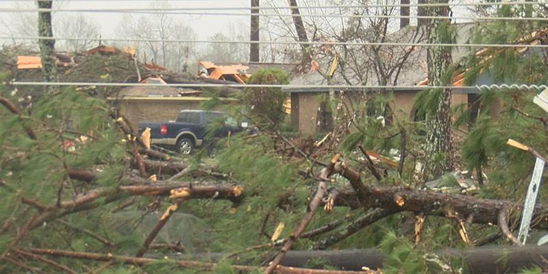 Trees fallen and spread across yard